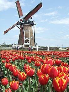 220px-De_Liefde_Windmill,_Sakura,_Chiba,_Japan_-_20060417.jpg
